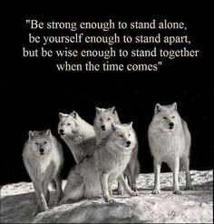 Discover and share She Wolf Quotes. Explore our collection of motivational and famous quotes by authors you know and love. Native American Wolf, Native American Wisdom, American Indian Quotes, American Symbols, American Women, American Indians, American Art, Wolf Spirit, Spirit Animal