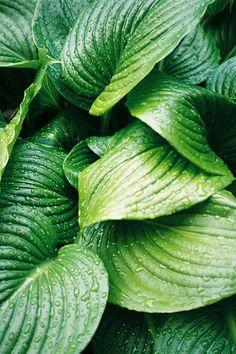 Very #green #leaves