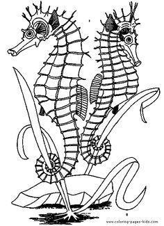 ocean animal coloring pages, color plate, coloring sheet,printable coloring picture