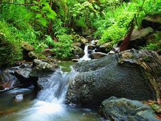 Puerto Rico – El Yunque tropical rainforest