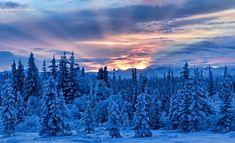 Oggi è il solstizio di inverno e con lui siamo entrati astronomicamente nella stagione invernale. Ma che cos'è un solstizio? È vero che da oggi le giornate tornano ad allungarsi? Come festeggiavano il solstizio gli antichi Romani? Ecco le curiosità storiche, scientifiche e astronomiche da sapere.