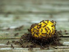 10 Natural Ways To Stop Ants Invading Your Home & Garden