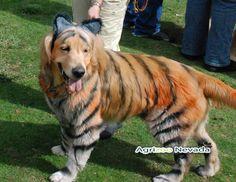 50 Disfraces caseros para mascotas