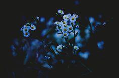 Flower  Blue Beautiful  Shadow  Light