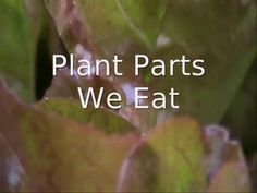 Plant Parts We Eat--good science video to use with \