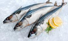 O κολιός είναι ψάρι που το καλοκαίρι αφθονεί στην χώρα μας και αξίζει να το