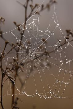 Spider web worth running into.gotta love morning dew or rain! Looks Like Crystal Jewelry! PIN IT Spider Art, Spider Webs, Morning Dew, Dew Drops, Rain Drops, Water Droplets, Macro Photography, Levitation Photography, Winter Photography