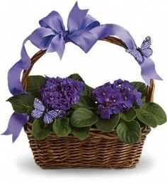 Violets And Butterflies in San AntonioTX, The Floral Basket