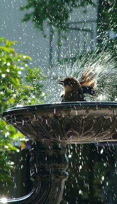 bird bath....