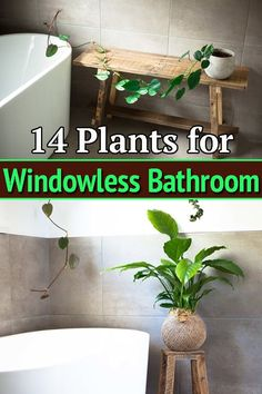 Don't have a window in your toilet, but you want to grow plants there? Worry not! This list of Plants for Windowless Bathroom is your answer! Best Indoor Plants, Cool Plants, Indoor Garden, Live Plants, Modern Master Bathroom, Small Bathroom, Bathroom Beadboard, Bathroom Ideas, Bathroom Without Windows