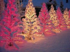 PRETTY OUTDOOR TREES
