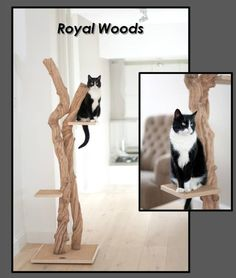 Royal Woods - PurrFect Design