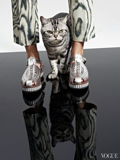 March 15 - Tommy the cat, metallic huaraches, moire: Matchy-matchy at its finest. Proenza Schouler silver woven mirrored leather flats, $1,295Proenza Schouler, NYC, 212.420.7300Tommy, All Creatures Great & Smallanimalagent.comPictured with: 3.1 Phillip Lim pant