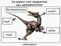 Los Niños: ΤΑ ΜΕΡΗ ΤΟΥ ΣΩΜΑΤΟΣ ΤΟΥ ΔΕΙΝΟΣΑΥΡΟΥ - Πίνακες Αναφ... Dinosaur Crafts, Album, Dragon, Homeschooling, Ideas, Dinosaurs, Dinosaur Projects, Picasa, Social Science