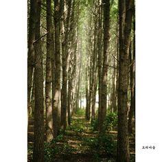 【namhyuk.k】さんのInstagramの写真をピンしています。《#gyeongju #city #경주 #도리마을 #조용한 #마을 # #숲길 #벌레 #거미줄 #겨울같은 #가을 #풍경 #사진 #숲속 #green #photos #林 #写真 #木 #葉 #delectable #derriere #calm》