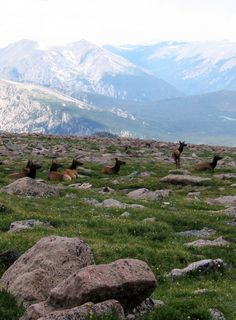 Long's Peak, Rocky Mountain National Park, Colorado.