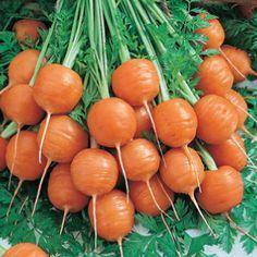 Parisian Carrot Seeds