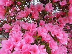Pretty Pink Flowers! Photo - National Geographic Kids My Shot