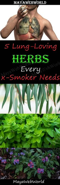 Five Lung-Loving Herbs Every Ex-Smoker Needs – MayaWebWorld