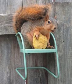 {squirrely in his chair} too cute!  We have a chair like this on the tree in the backyard!  Wish a squirrel would actually sit on it so I can take a picture! lol