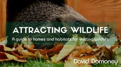 Attracting beneficial wildlife by adding homes and habitats to your garden