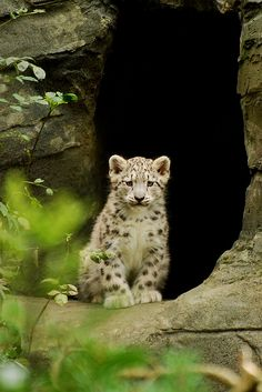 Leopard cub :)