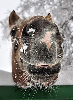Cute! I love how a horse's nose is soft like velvet