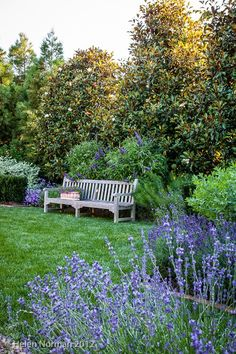 Bench in Blue Garden