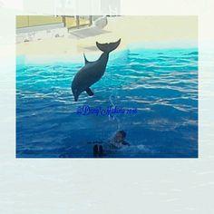 Salto del delfino