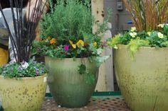Dirt Simple | Gardening and Landscape Blog by Deborah Silver - Part 175