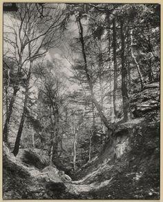 [Footpath in the Siebengebirge]; August Sander (German, 1876 - 1964); about 1930 - 1940; Gelatin silver print; 29.1 x 23.2 cm (11 7/16 x 9 1/8 in.); 84.XM.126.12; Copyright: © J. Paul Getty Trust