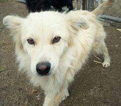Fes es un perrito muy activo, cariñoso y noble. Se lleva muy bien con otros perros. Ya está vacunado, esterilizado y desparasitado.