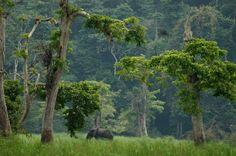 Langoué Bai, Gabon