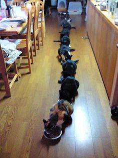 formation-cat03.jpg