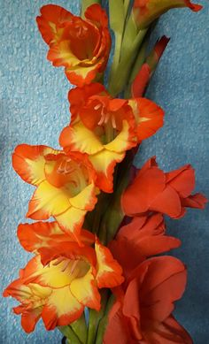 Garden Flowers - Annuals Or Perennials Gladiolus Tropical Flowers, Summer Flowers, Colorful Flowers, Gladioli, Gladiolus Flower, Flower Names, Amazing Flowers, Daffodils, Garden Projects