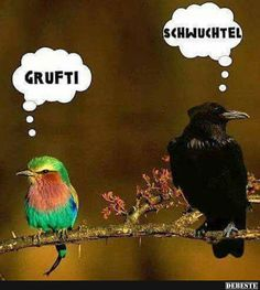 Goth and Gay Birds. Surely you have a sense of humor? Funny Birds, Funny Animals, Cute Animals, Angry Animals, Talking Animals, Crazy Animals, Geeks, Humor Grafico, Just For Laughs