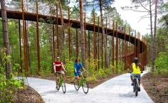 Breeze Through the Forest Canopy on a Spiraled Bike Path in Belgium Forest Path, New Forest, Landscape Architecture, Landscape Design, Architecture Design, Forest Resources, Conifer Trees, Bike Path, Bike Parking