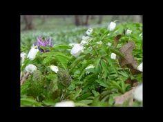Wiosna - pierwsze oznaki w przyrodzie - nowy film edukacyjny dla dzieci po polsku - AbcZabawa - YouTube