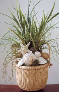 Shells and Grass in 6 Nantucket Basket Beach Decor   Nautical Decor   Tropical Decor   Coastal Decor