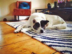 Important Tips Before Placing Rugs On Hardwood Floors