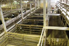 How to understand the livestock markets: Once you understand what is being sold, the bidding part is easy.