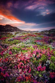 Toxos en flor by Manuel Bermúdez - Photo 85259013 - 500px