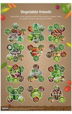 Vegetable Garden Planning, Veg Garden, Edible Garden, Garden Beds, Home Vegetable Garden Design, Vegetable Gardening, Garden Shrubs, Container Gardening, Permaculture Garden
