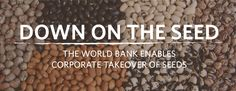 World Bank Pushes Pro-Corporate Agenda for Seeds - Cornucopia Institute Corporate Business, Enabling, The Expanse, Farmers, Agriculture, Countries, Seeds, Around The Worlds, Politics