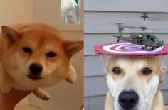 Just 42 Dog Vines, Because They're The Only Thing That Can Give You Joy