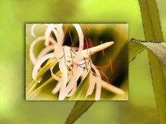 'Blüte voller Kunst' von Dirk h. Wendt bei artflakes.com als Poster oder Kunstdruck $16.99