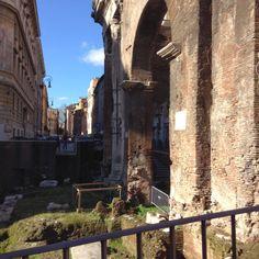 Siamo al Portico di Ottavia, il Ghetto ebraico di Roma, zona delimitata da Lungotevere dei Cenci, Via Arenula,