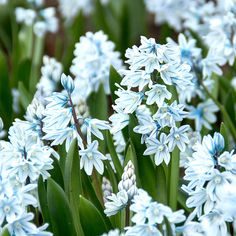 Cut Flower Garden, Cut Flowers, Plants, Beautiful, Yard, Cottage, Gardening, Inspiration, Casa De Campo