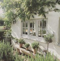 Under the window#pots #terracotta #herbs #olivetree #oak #wednesday
