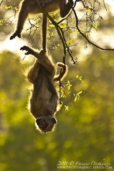 7 pictures that prove wild animals have a sense of humour. Africa Geographic blog